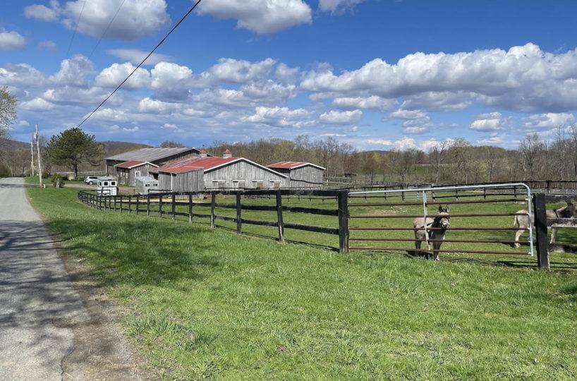 Horse Farm Offers Pristine and Peaceful Setting